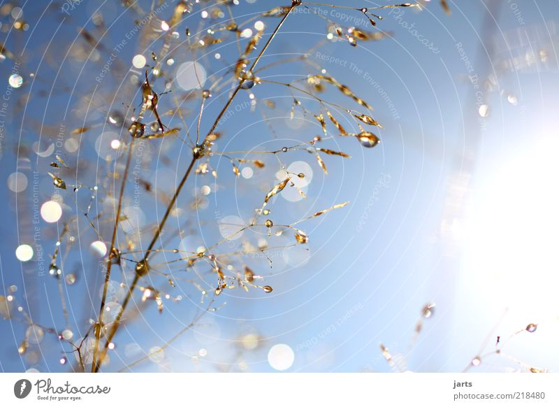 Nature Sky Sun Plant Autumn Grass Glittering Weather Drops of water Fresh Natural Beautiful weather Reflection Copy Space Highlight Lens flare