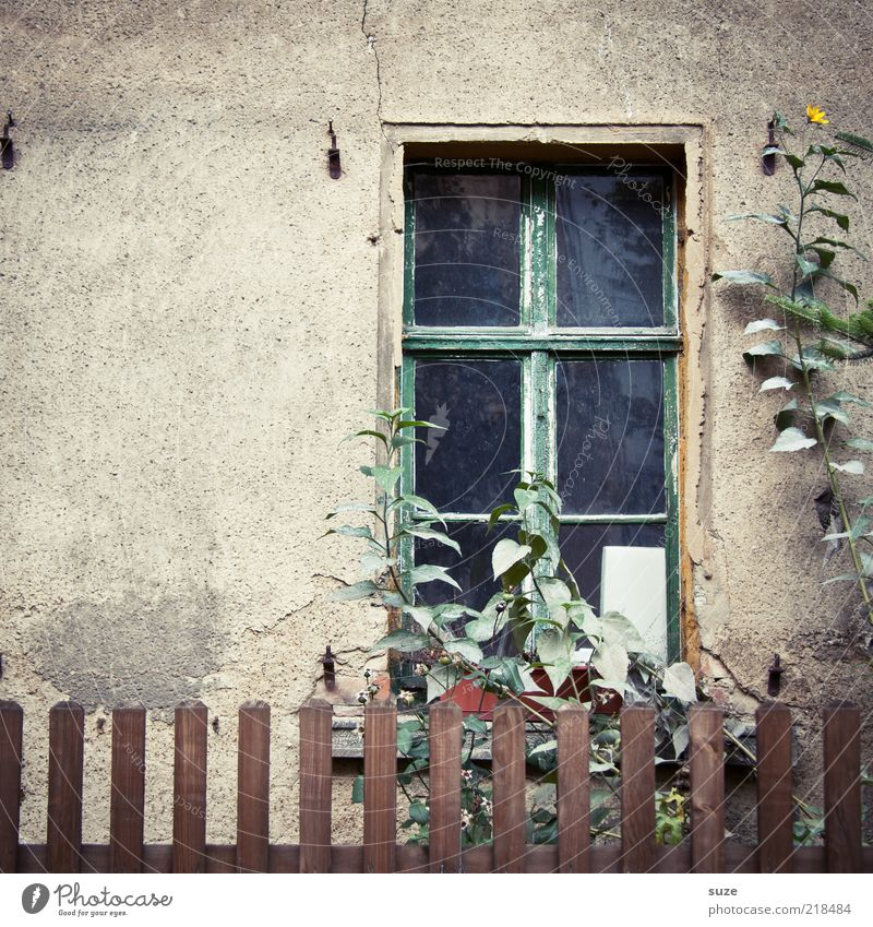 windows Living or residing Garden Plant Flower Wall (barrier) Wall (building) Facade Window Old Gloomy Dry Brown Grief Loneliness Decline Past Transience Growth