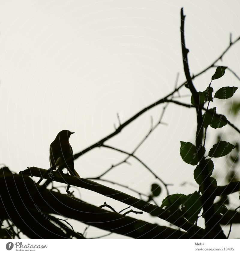 Nature Tree Plant Leaf Animal Bird Environment Sit Branch Beak Silhouette Crouch Twigs and branches Perspective
