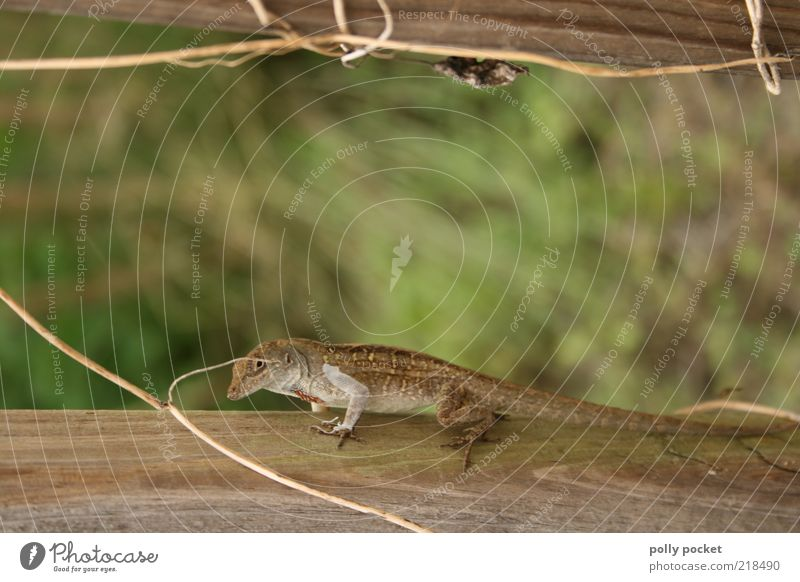 Nature Animal Observe Natural Wild animal Amphibian Salamander