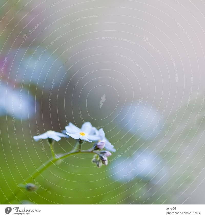 gentle tomorrow Environment Nature Plant Flower Blossom Blue Green Colour photo Exterior shot Close-up Detail Copy Space top Morning Shallow depth of field