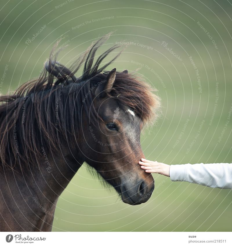 Nature Green Beautiful Hand Animal Emotions Brown Friendship Natural Arm Wild animal Cute Horse Touch Friendliness Curiosity