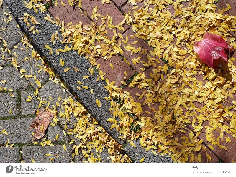 Nature Plant Red Leaf Yellow Street Autumn Gray Lanes & trails Moody Environment Esthetic Change Lie Transience Natural