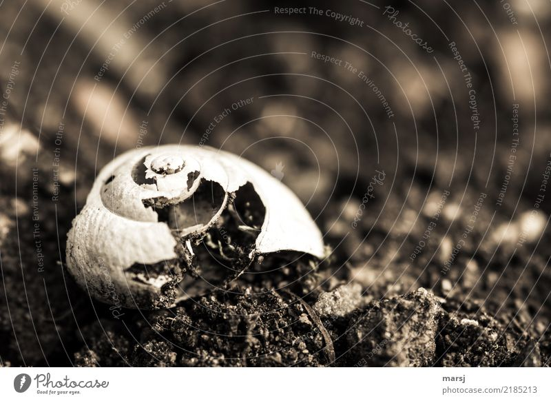 Decay of a snail shell lying on the ground. Earth Snail shell Structures and shapes Spiral Old Authentic Dark Simple Creepy naturally Gloomy Brown Sadness Grief