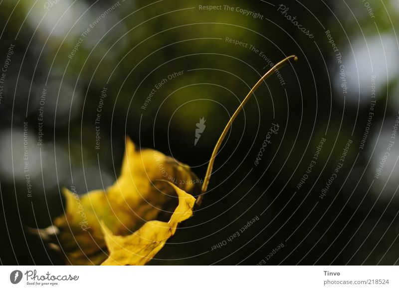 Nature Yellow Autumn Flying Gold Change To fall Transience Easy Ease Individual Partially visible Snapshot Section of image Autumn leaves