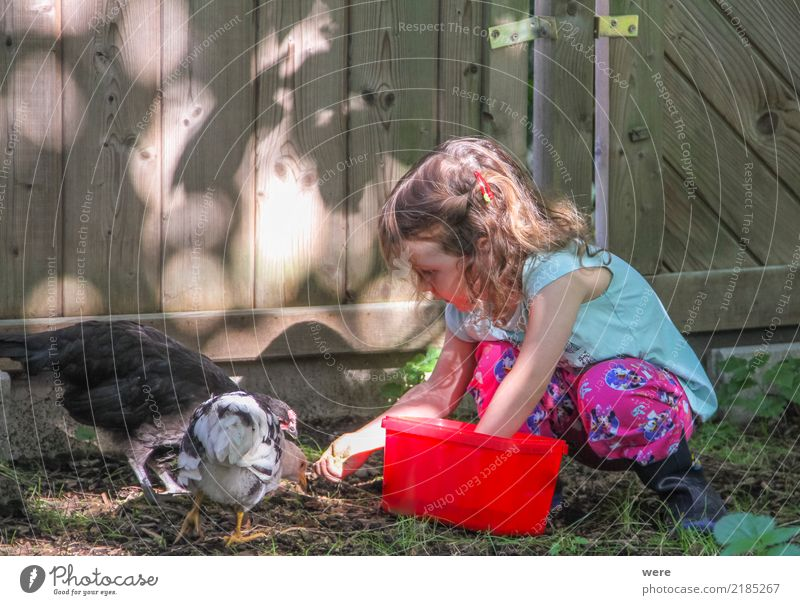 A girl at an early age feeds chickens in the garden Child Agriculture Forestry Human being Girl 1 3 - 8 years Infancy Nature Animal Bird Feeding Together Happy