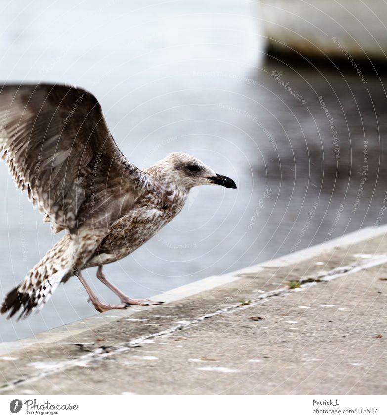 White Animal Gray Bright Bird Free Feather Wild animal Wing Seagull Baltic Sea Beak Nordic