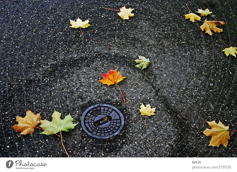 spinning top Autumn Weather Rain Leaf Places Street Lanes & trails Dark Gloomy Under Transience Drainage system Gully Autumn leaves Autumnal Autumnal colours