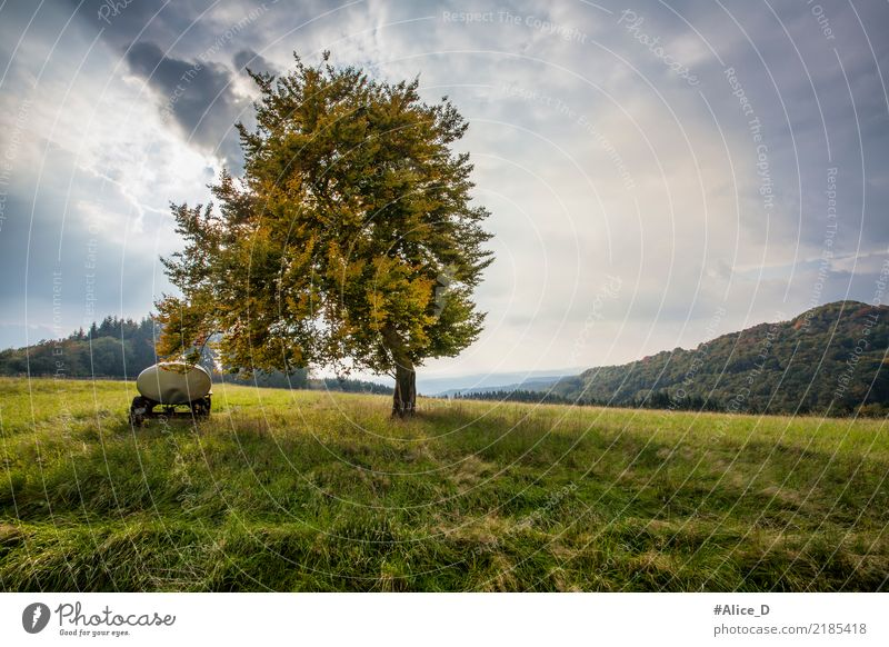 autumn days Summer Nature Landscape Elements Sky Cloudless sky Clouds Autumn Wind Plant Tree Grass Meadow Field Hill Pasture Saint Catherine Germany Europe