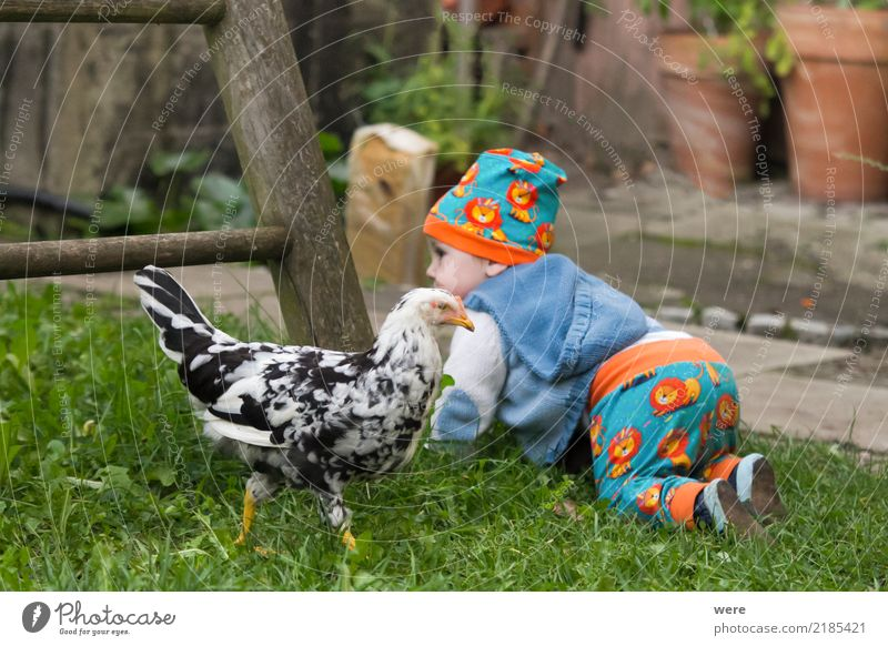 Getting up with the chickens Child Agriculture Forestry Human being Baby Toddler Nature Animal Farm animal Bird Curiosity Cute feathers Grand piano youthful