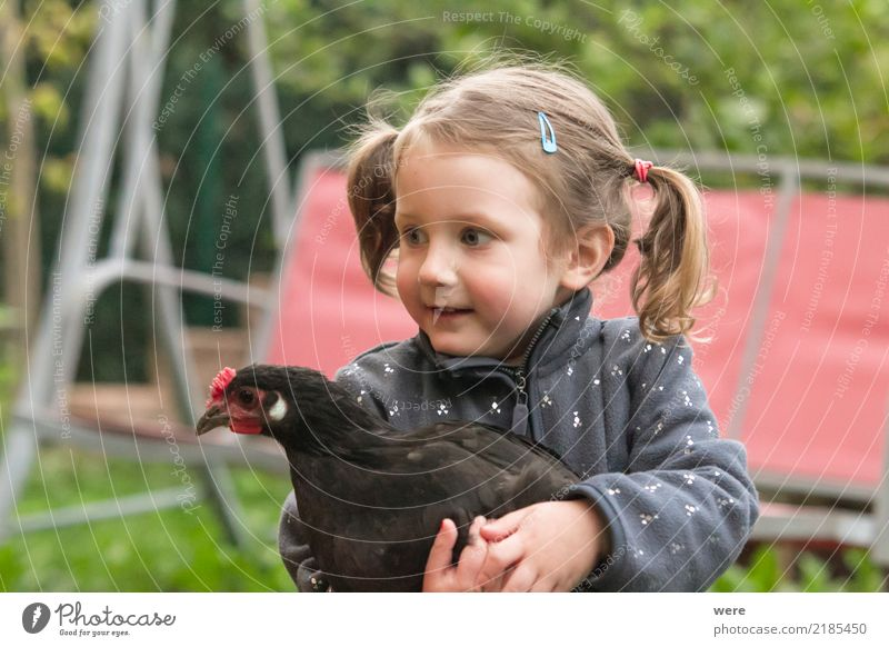 little girl holds a chicken from Augsburg Child Agriculture Forestry Human being 1 3 - 8 years Infancy Nature Animal birds Playing Painting (action, work)