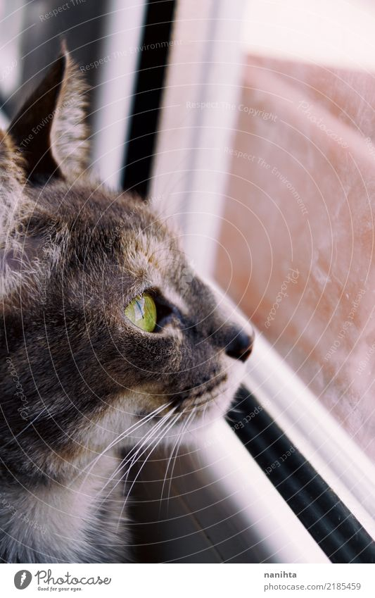 Beautiful cat looking through a window Window Animal Pet Animal face 1 Glass Crystal Observe Authentic Simple Free Curiosity Cute Brown Gray Green White