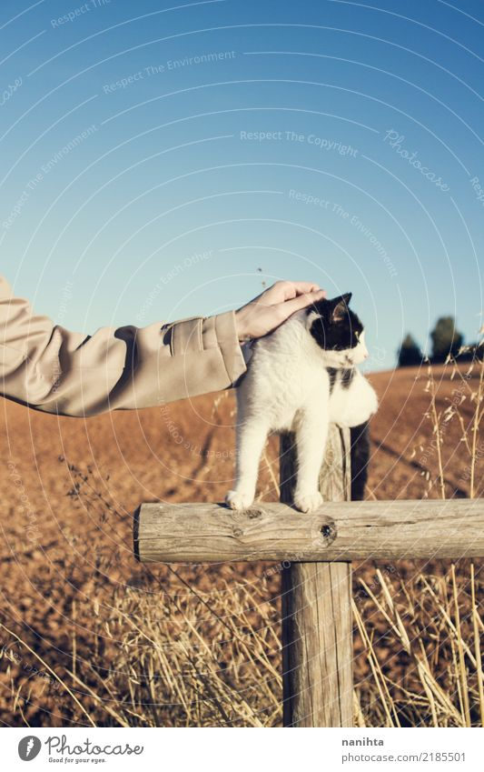Hand touching a cat Cat Human being Nature Youth (Young adults) Plant Blue Summer White Landscape Animal Environment Autumn Natural Brown Wild