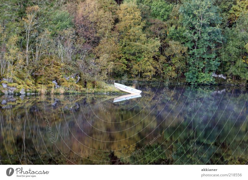 water feature Environment Nature Plant Elements Water Autumn Tree Wild plant Forest Lakeside Natural Watercraft Jetty Water reflection Mirror image Calm Rowboat
