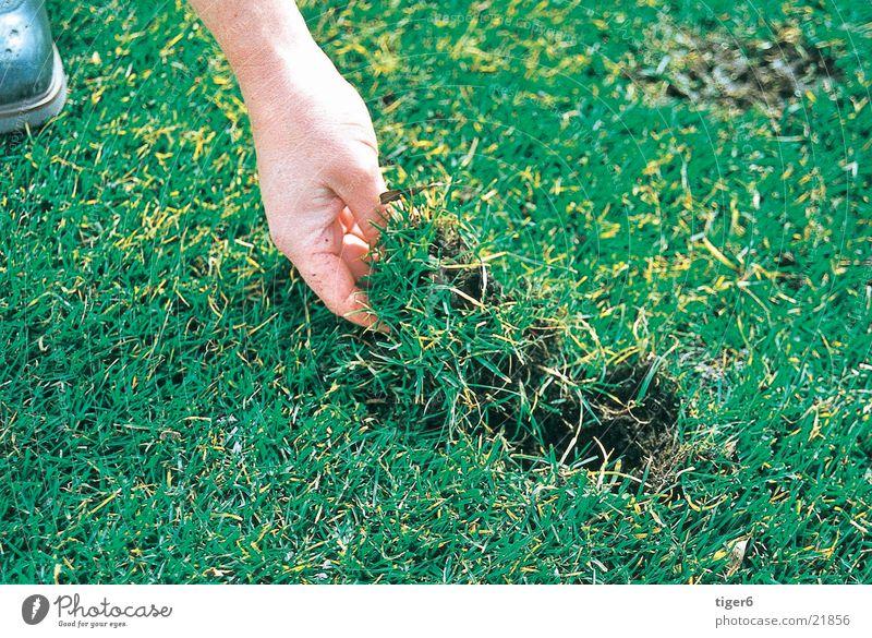 Hand lays grass Grass Golf divot