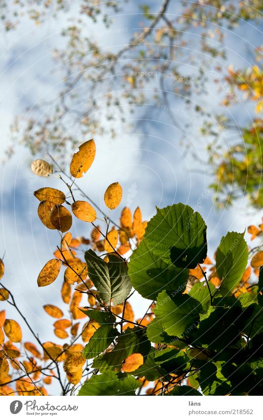 Nature Sky Tree Plant Leaf Clouds Autumn Environment Change Transience Beautiful weather Foliage plant Autumnal Autumnal colours