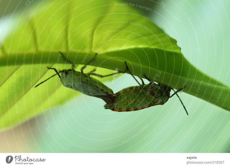 Nature Green Plant Leaf Animal Together Pair of animals Environment Insect To hold on Wild animal Beetle Macro (Extreme close-up) Rachis