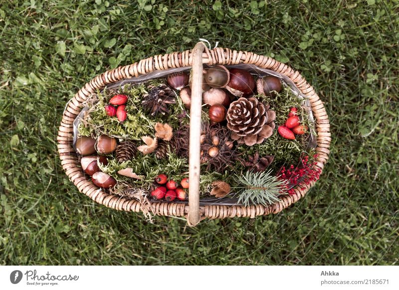 Basket with autumn fruits on green meadow, top view Harmonious Contentment Living or residing Decoration Feasts & Celebrations Thanksgiving Nature Autumn Grass