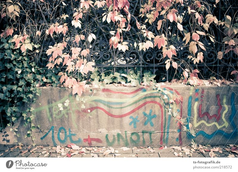 footnote Autumn Bushes Ivy Leaf Deserted Wall (barrier) Wall (building) Fence iron fence Wrought iron Lanes & trails Stone Concrete Metal Sign Characters