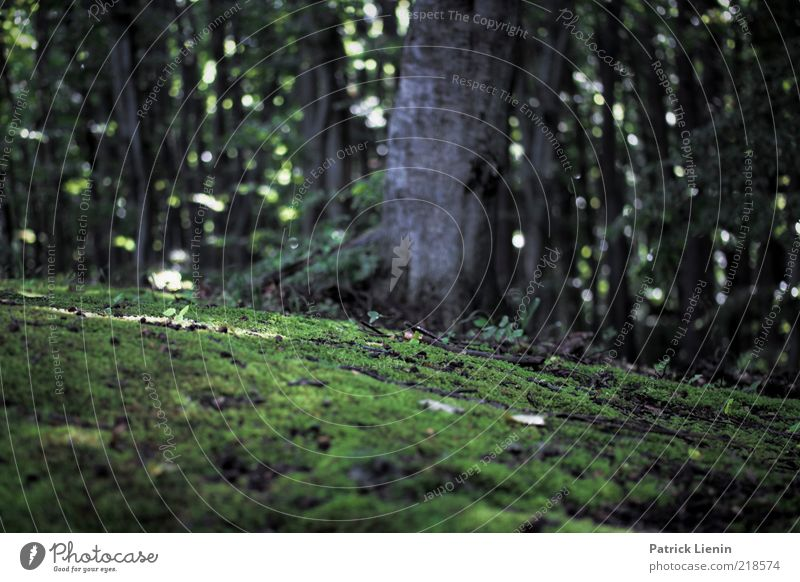 On the road in the forest Environment Nature Plant Weather Tree Moss Forest Wet Tree trunk Green Subdued colour Exterior shot Deserted Day Shadow Contrast Blur