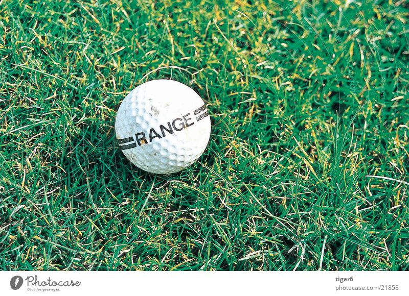 ball on the field Meadow Sports Golf Ball Nature
