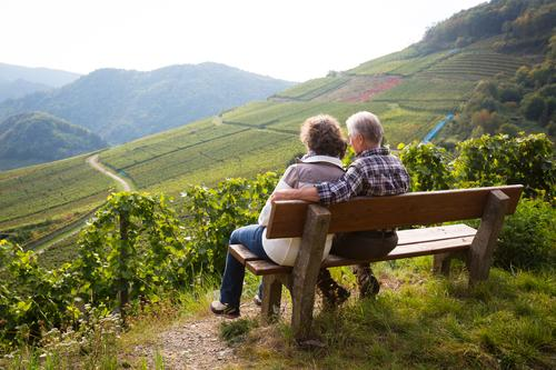 A couple of senior citizens sitting relaxed on a bench in the vineyard and enjoying the view Well-being Calm Trip Masculine Feminine Female senior Woman