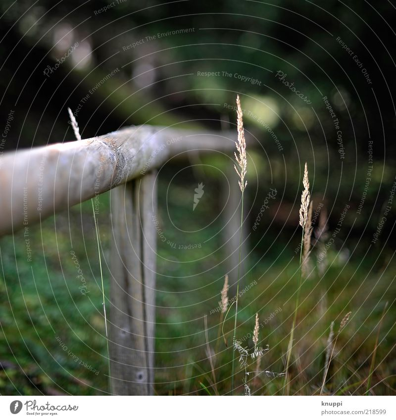 autumn-green Environment Nature Plant Sunlight Autumn Grass Blossom Foliage plant Wild plant Fence Fence post To dry up Growth Old Dark Brown Yellow Green Black