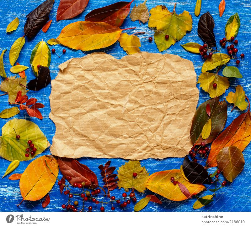 Autumn leaves and paper on a blue background Craft (trade) Leaf Forest Paper Bright Blue Brown Yellow Red Colour border Botany branch colorful Copy Space fall