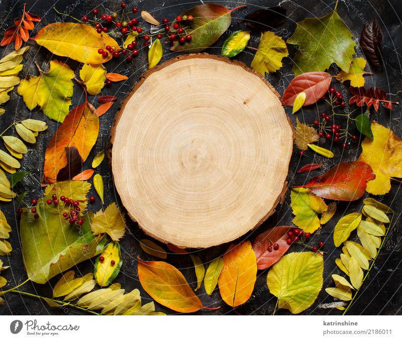 Autumn leaves and berries on a dark background Craft (trade) Leaf Forest Paper Wood Dark Bright Brown Yellow Green Red Colour border Botany branch colorful