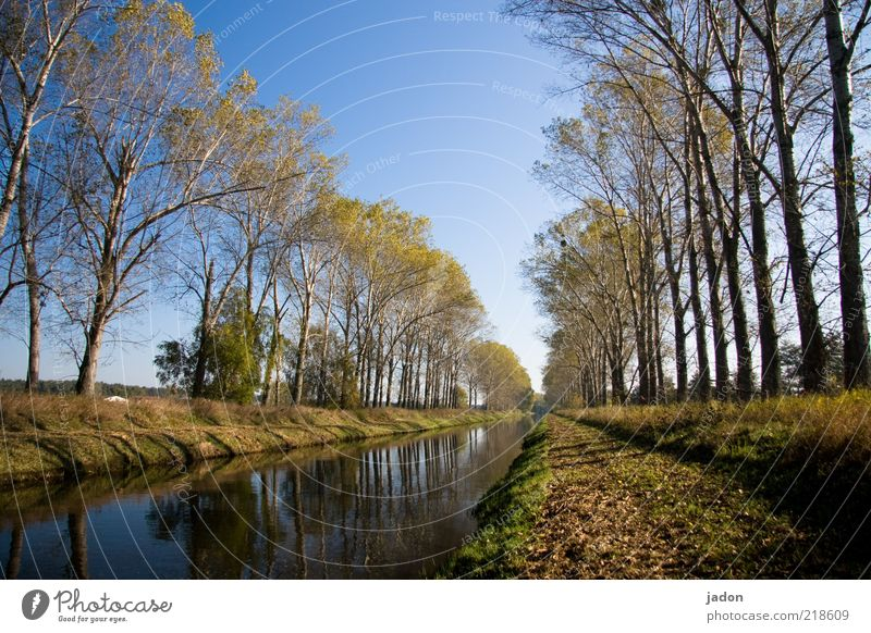 Nature Water Tree Plant Street Autumn Landscape Contentment Environment River Infinity Navigation Beautiful weather River bank Avenue Blue sky