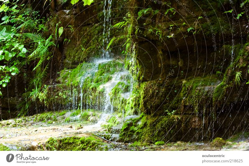 Juicy Environment Nature Plant Earth Water Bushes Moss Wild plant Fern Virgin forest Waterfall Asia China Guilin Growth Splashing Dripping Rock Peaceful Damp