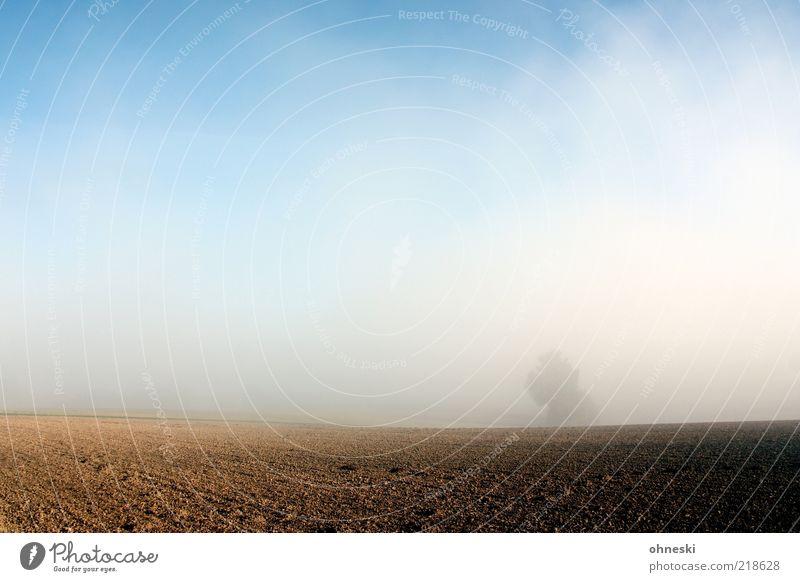 fog Landscape Autumn Weather Beautiful weather Fog Tree Field Hope Life Colour photo Dawn Sunlight Blue sky Agriculture Copy Space top Deserted