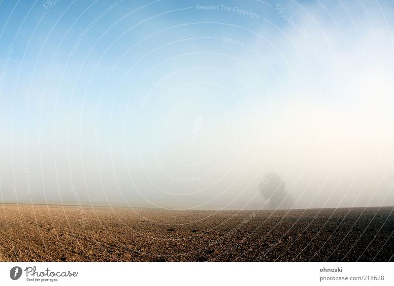 Tree Life Autumn Landscape Field Fog Weather Hope Beautiful weather Agriculture Blue sky