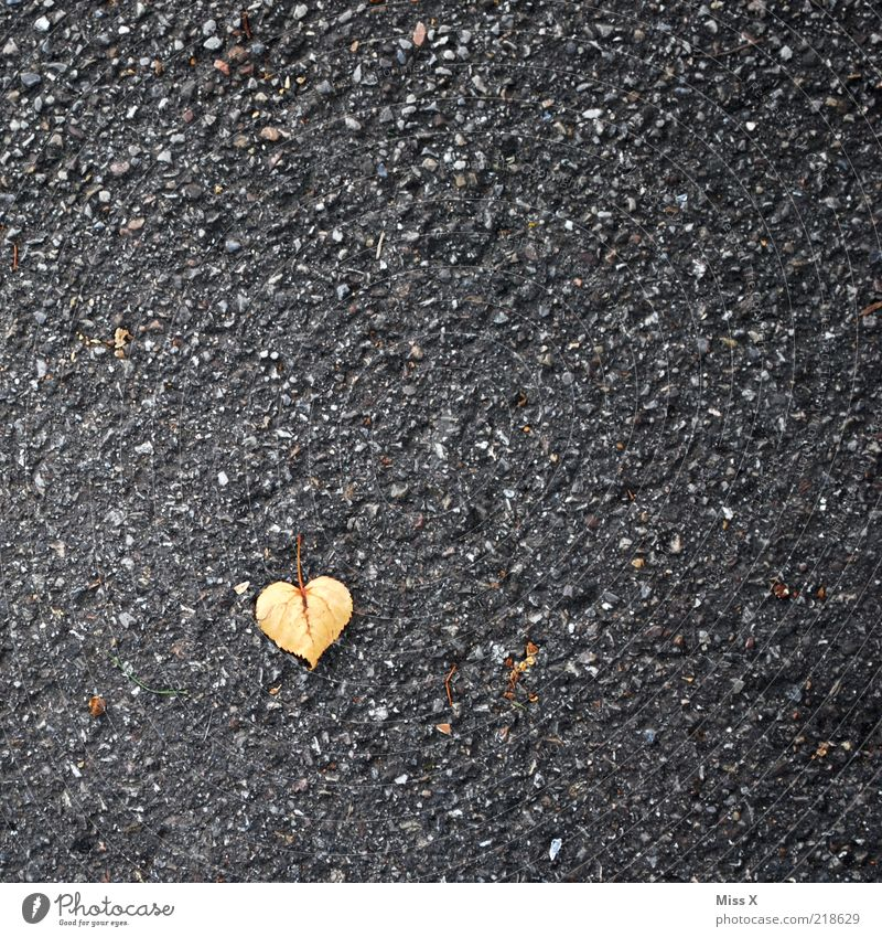 Leaf Love Small Heart Asphalt Tar Autumn leaves Heart-shaped Lime leaf