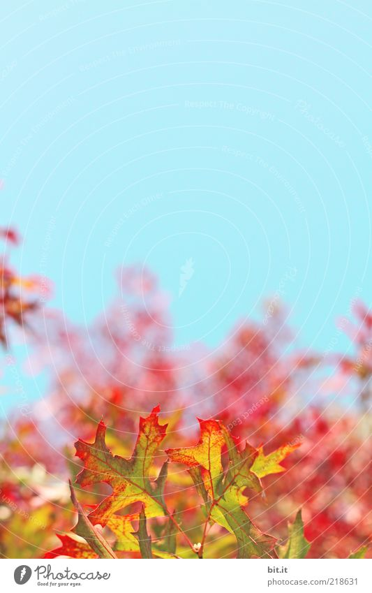 Nature Sky Blue Plant Red Summer Leaf Yellow Autumn Landscape Air Weather Gold Growth Change Kitsch