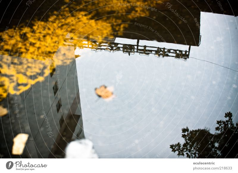 Water Sky Tree Leaf House (Residential Structure) Yellow Cold Autumn Environment Facade Asia Asphalt China Puddle Branchage Chinese