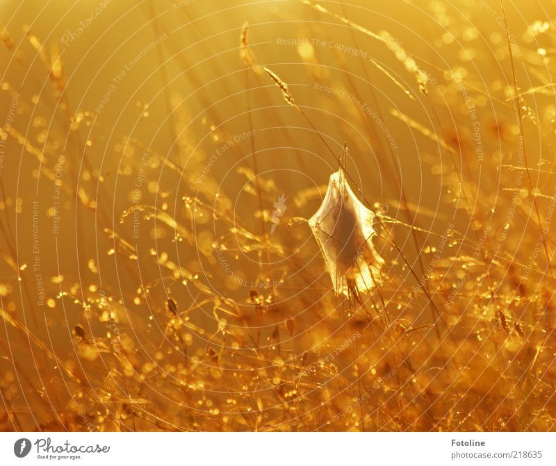 In the morning half past six in Germany Environment Nature Plant Elements Water Drops of water Autumn Grass Bright Wet Natural Yellow Gold Orange Cocoon