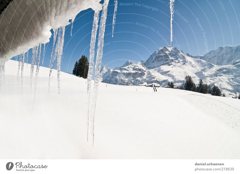 White Tree Blue Winter Vacation & Travel Snow Mountain Landscape Ice Bright Frost Tourism Climate Switzerland Alps Peak