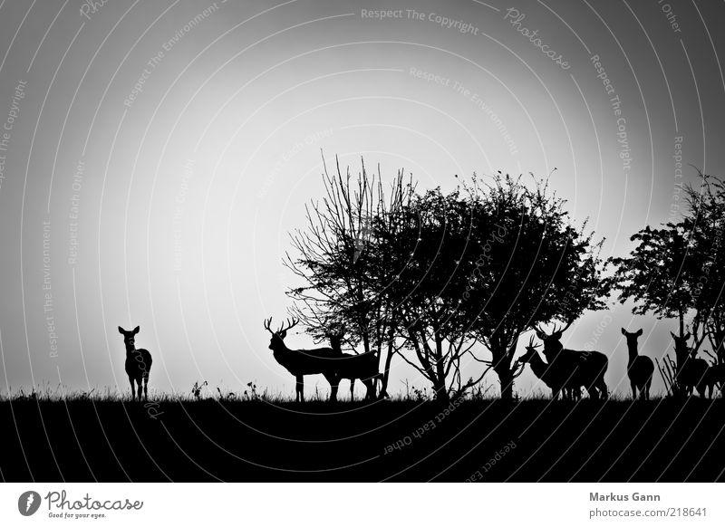 Nature White Tree Black Animal Forest Meadow Landscape Grass Gray Weather Fog Bushes Group of animals Wild animal Antlers