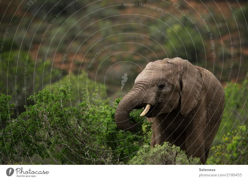 Nature Vacation & Travel Summer Animal Far-off places Environment Natural Tourism Trip Free Wild animal Bushes Adventure Africa Animal face Elephant