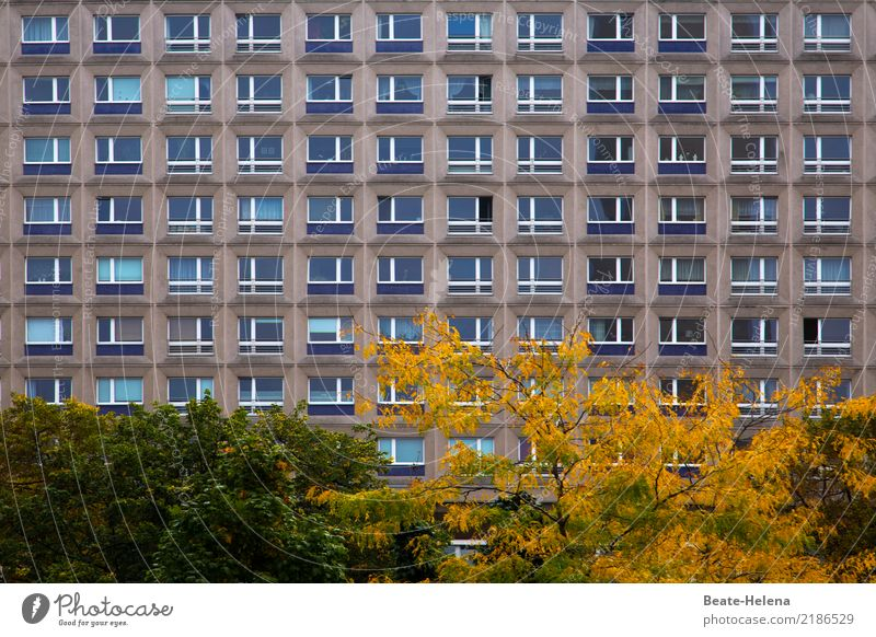 dashes of colour Living or residing Flat (apartment) Environment Autumn Plant Tree Bushes Park Berlin High-rise Manmade structures Building Architecture Facade