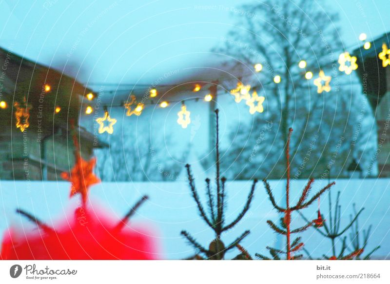 Nature Christmas & Advent Tree Blue Red Winter House (Residential Structure) Cold Snow Moody Stars Fog Star (Symbol) Christmas tree Fir tree