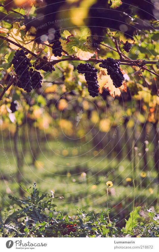 reading Food Fruit Nutrition Environment Autumn Plant Agricultural crop Field Fresh Glittering Good Beautiful Delicious Natural Positive Round Juicy Sweet Wild