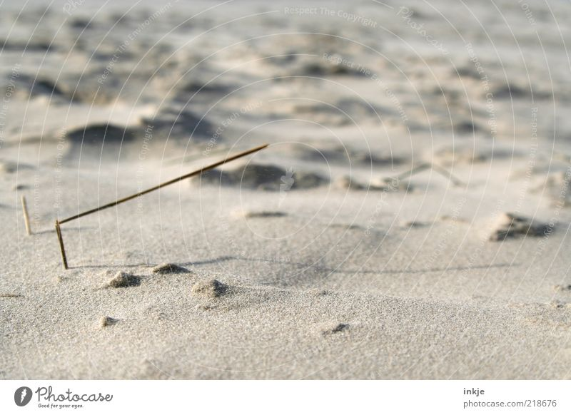 Nature Summer Beach Calm Relaxation Life Gray Sand Brown North Sea Pure Well-being Blade of grass Harmonious