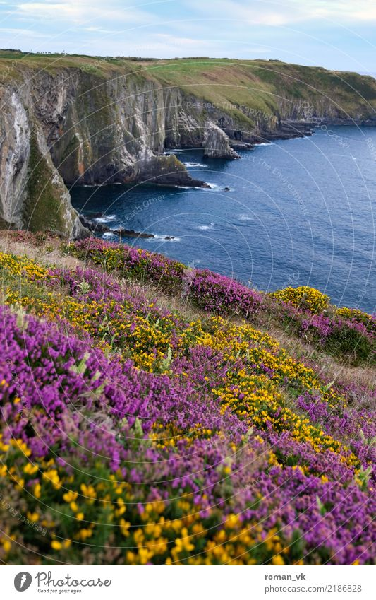 Flower meadow at a deadly abyss Environment Nature Landscape Plant Elements Earth Water Sky Clouds Summer Beautiful weather Grass Bushes Moss Hill Rock Coast