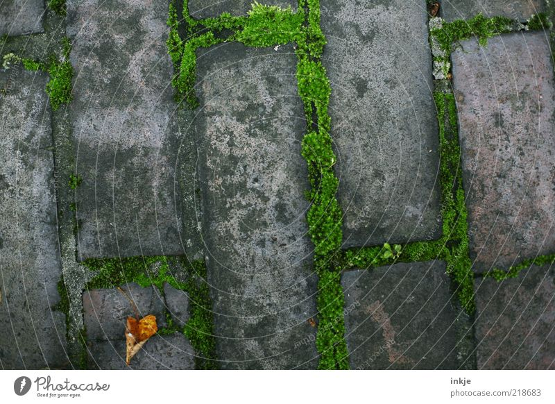 Autumn on the curb Moss Leaf Sidewalk Stone Brick Old Dirty Gloomy Dry Brown Gray Green Stagnating Lanes & trails Section of image Background picture