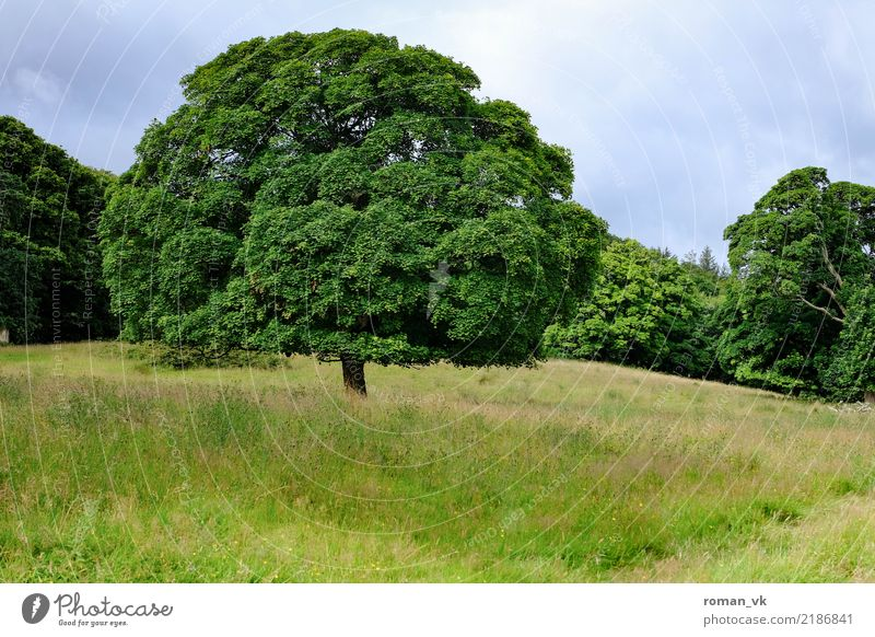 The dream of the tree Environment Nature Landscape Plant Earth Summer Tree Grass Meadow Esthetic Fat Green Spring fever Life Wisdom Northern Ireland Treetop