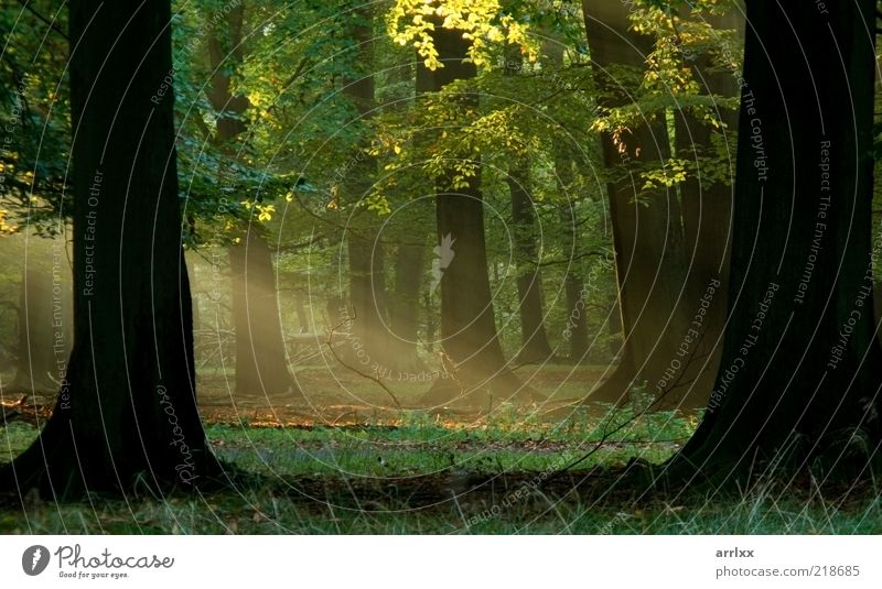 Fairytail forest Nature Old Green Beautiful Tree Plant Sun Joy Leaf Forest Yellow Colour Autumn Landscape Environment Wood