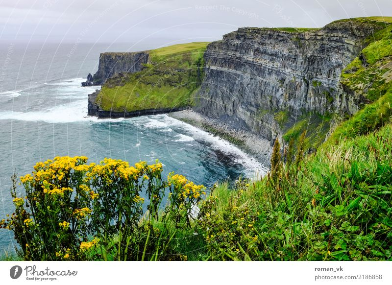 Don't take another step! Environment Nature Landscape Plant Elements Earth Summer Rock Canyon Coast Ocean Old Esthetic Threat Northern Ireland Cliff Steep