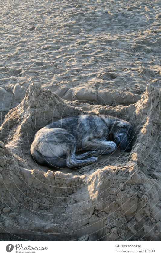 Summer Beach Vacation & Travel Calm Animal Relaxation Dream Dog Contentment Brown Funny Sleep Safety Break Uniqueness